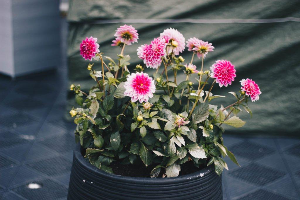 Blomservase