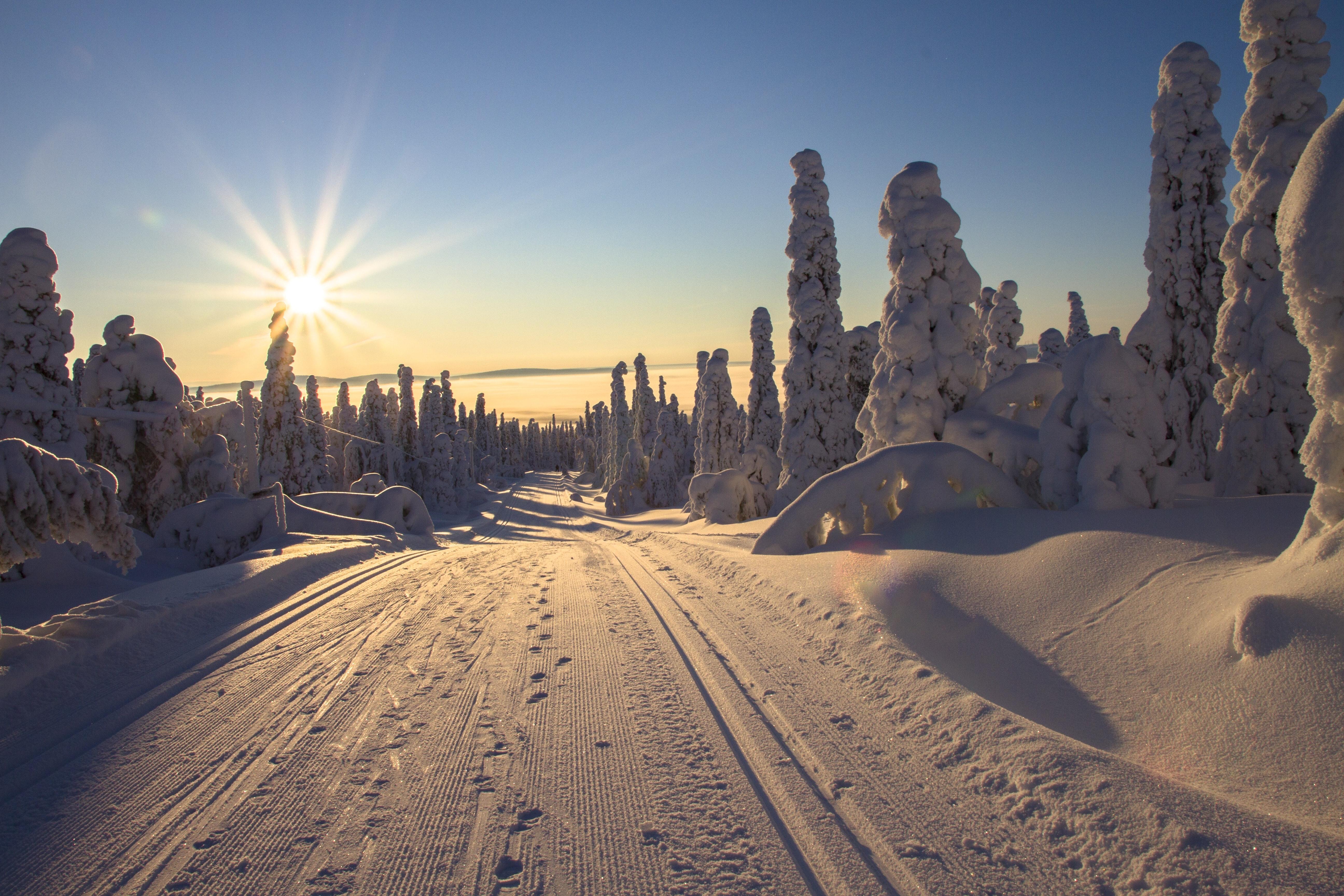 Vinter ski marka illustrasjon natur